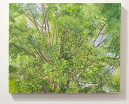 Sylvia Plimack-Mangold / Sylvia Plimack-Mangold Maple Tree Detail 2008  2008 62 x 77 cm oil on linen