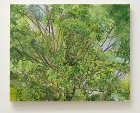 Sylvia Plimack-Mangold / Sylvia Plimack Mangold Maple Tree Detail 2008  2008 62 x 77 cm Oil on linen