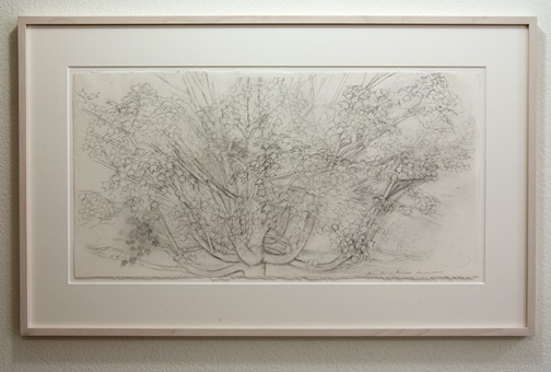 Sylvia Plimack Mangold / Sylvia Plimack Mangold Maple Tree  2009  38.7 x 76.8 cm pencil on paper