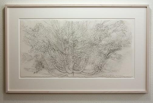 Sylvia Plimack-Mangold / Sylvia Plimack Mangold Maple Tree  2009  38.7 x 76.8 cm pencil on paper
