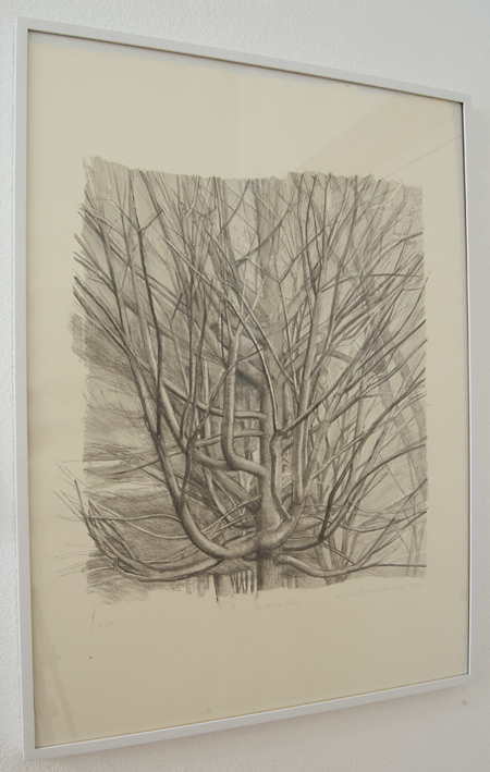 Sylvia Plimack Mangold / Sylvia Plimack-Mangold The Maple Tree 1998  1998 81.3 x 59 cm lithograph Edition 9/40