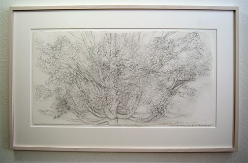 Sylvia Plimack-Mangold / Sylvia Plimack-Mangold Maple Tree  2009 38.7 x 76.8 cm pencil on paper