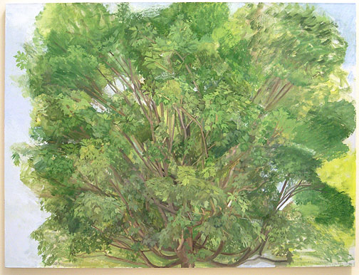 "Sylvia Plimack-Mangold / The Maple Tree, Summer 2007  2007 114.3 x 152.4 cm / 45 x 60 "" oil on linen"