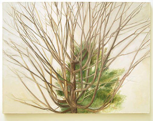 "Sylvia Plimack-Mangold / The Maple Tree with Pine  2005 76 x 101.6 x 4.5 cm / 30 x 40 "" oil on linen"