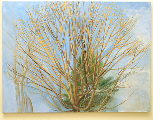 "Sylvia Plimack-Mangold / Winter Maple and Pine  2007 114.3 x 152.4 cm / 45 x 60 "" oil on linen"